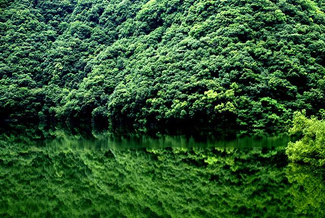 strong_green_s.jpg