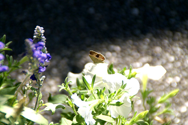 takanawachurch_butterfly.jpg