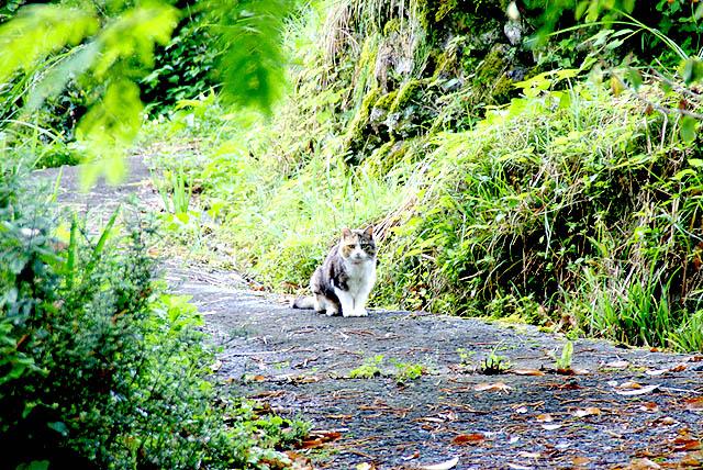 tanisuji_cat.jpg