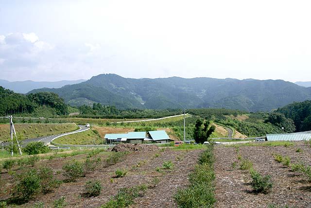 uchiko_ecofarm_field.jpg