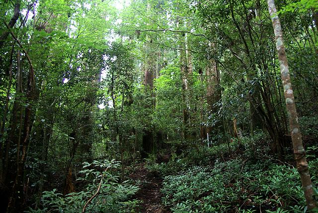 yanase_senbonyama_forest3.jpg
