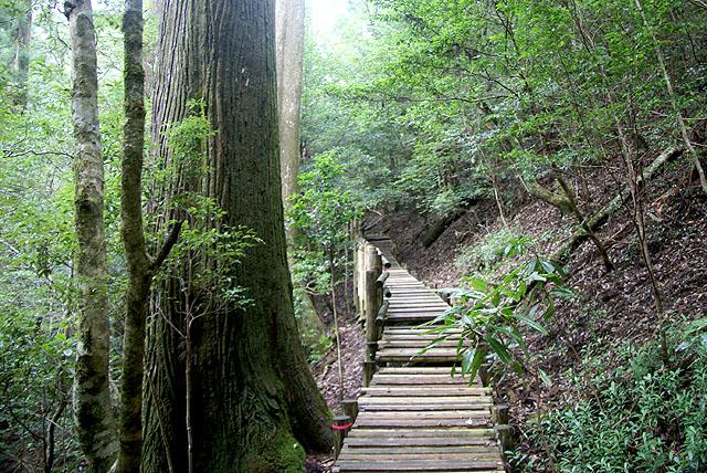 yanase_senbonyama_woodstair.jpg