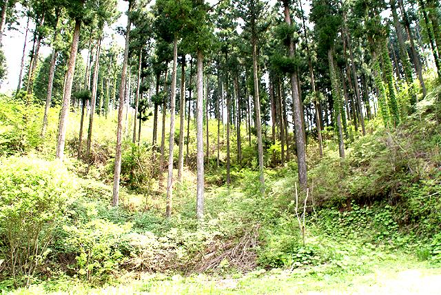 yusukawa_amatsutsumi_forest.jpg