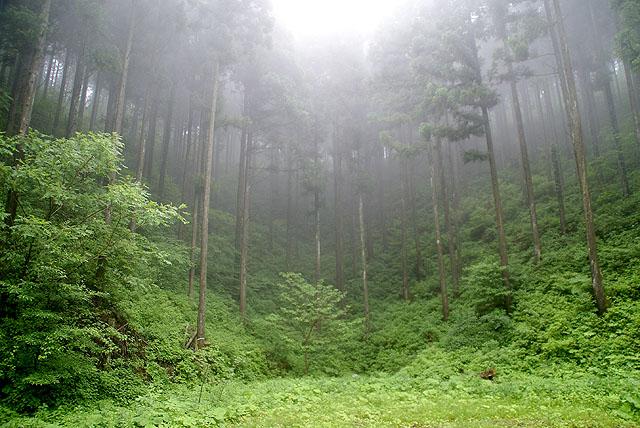 yusukawa_amatsutsumiyama_fogforest2_s.jpg