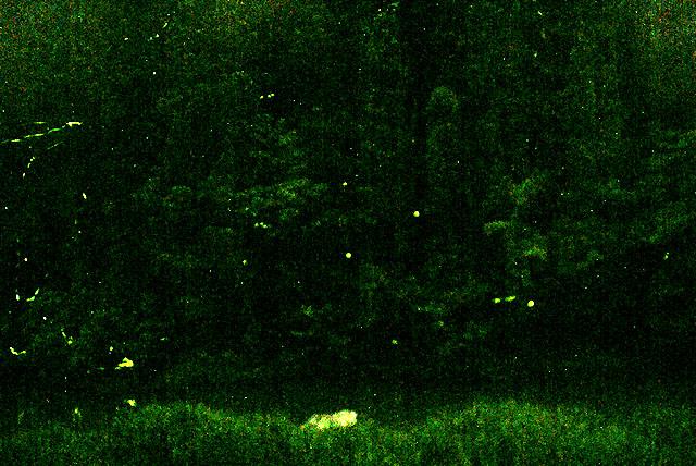 yusukawa_firefly1.jpg