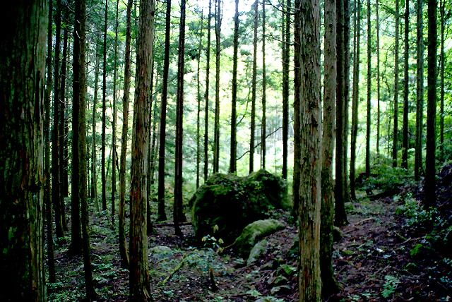 yusukawa_katsuragi_forest_s.jpg