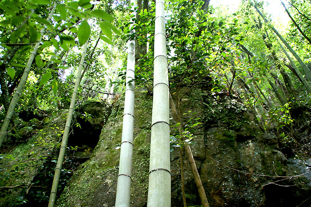 yusukawa_onbandaki_bamboo2_s.jpg