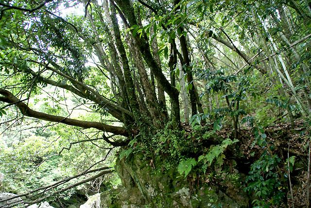 yusukawa_onbandaki_tree_s.jpg