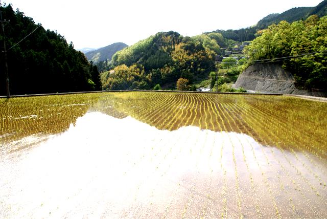 yusukawa_tanbo.jpg
