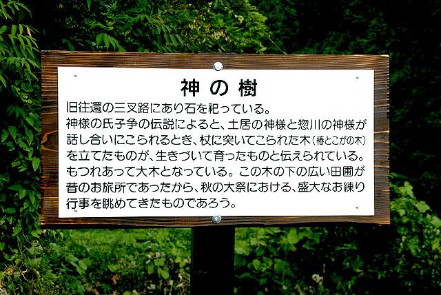 yusukawaboard_kaminoki_up.jpg